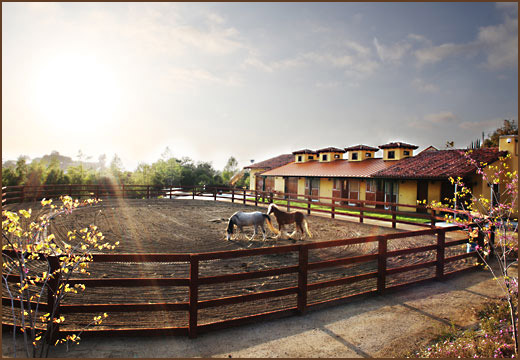 Skyridge - Barn and Stables